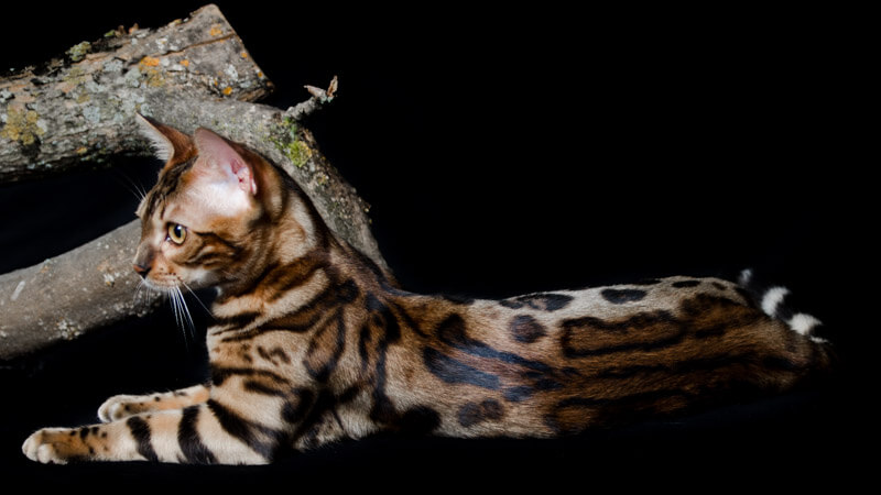 tienda gatos gbarcelona