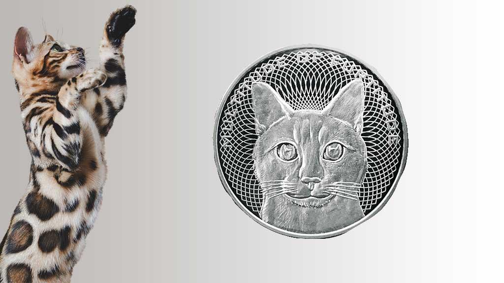 comprar gato bengali precio