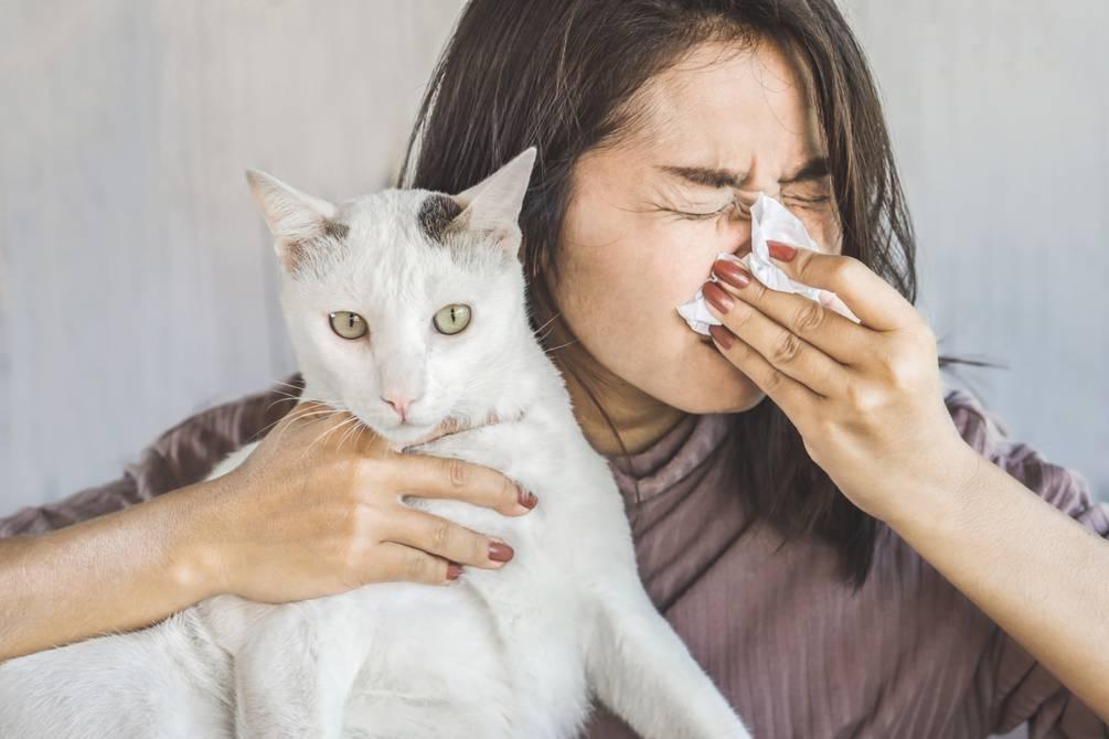 alergia gatos
