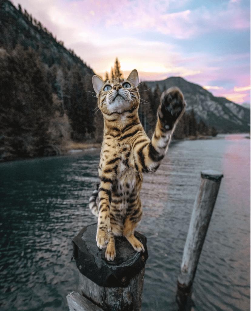 sukii el gato aventurero